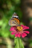 Бабочка крупного плана на цветке Стоковая Фотография