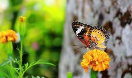 Бабочка крупного плана Стоковое Фото