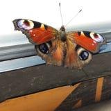 Бабочка крытая Стоковое Изображение RF
