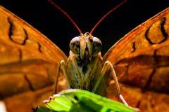 Бабочка макроса Стоковые Фото