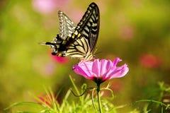 Бабочка медлит над цветком Стоковое Изображение RF