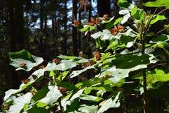 Бабочка монарха в диком стоковые фотографии rf