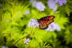Бабочка монарха на фиолетовом цветке Стоковые Изображения