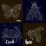 Бабочка, муха, осьминог, пчела, комплект созвездия Стоковые Изображения RF