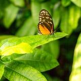 бабочка насекомого на зеленой запачканной предпосылке, Стоковое Фото