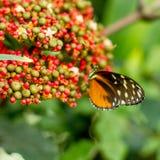 бабочка насекомого на зеленой запачканной предпосылке, Стоковые Фото