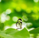 бабочка насекомого на зеленой запачканной предпосылке, Стоковое фото RF