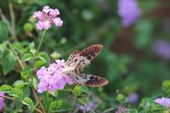 Бабочка - насекомое, цветок, весеннее время, природа, изменение Стоковые Изображения