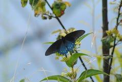 Бабочка наслаждаясь обедом в солнце стоковое изображение rf
