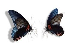 Бабочка на белой предпосылке Стоковые Изображения RF