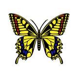 Бабочка на белой предпосылке Стоковые Изображения