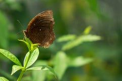 Бабочка на ветви Стоковое Изображение