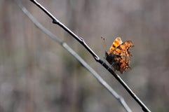 Бабочка на ветви Стоковое Фото