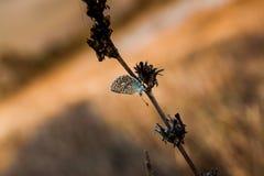 Бабочка на восходе солнца стоковое изображение rf