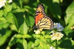 Бабочка на герцоге Саде Стоковое Фото