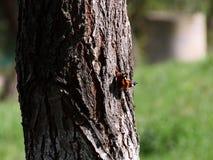 Бабочка на древесине стоковое изображение rf