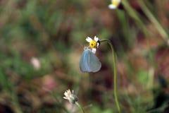 Бабочка на желтом цветке Стоковые Изображения