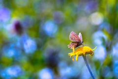 Бабочка на желтом цветке Стоковые Изображения RF