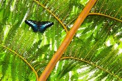Бабочка на заводе Стоковое Фото