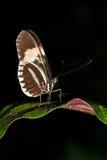 Бабочка на заводах лист Стоковое Фото
