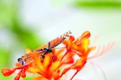 Бабочка на запачканной предпосылке, Флориде Стоковое фото RF