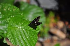 Бабочка на зеленых зеленых лист стоковые фото