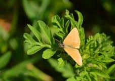 Бабочка на зеленых лист стоковая фотография