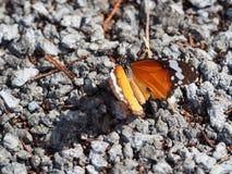 Бабочка на земле Стоковое Изображение