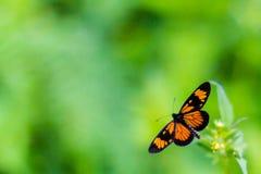 Бабочка на зеленом цвете Стоковое фото RF
