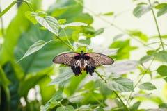 Бабочка на зеленых лист Стоковые Изображения