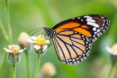 Бабочка на зеленых лист Стоковое Изображение