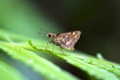Бабочка на листьях Стоковые Фото
