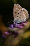 Бабочка на листьях стоковое изображение