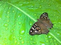 Бабочка на листьях Стоковая Фотография RF
