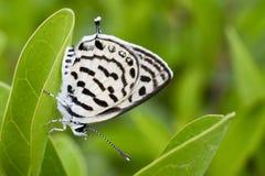 Бабочка на листьях стоковое фото