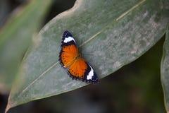 Бабочка на лист Стоковое Фото