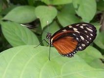 Бабочка на лист Стоковые Изображения
