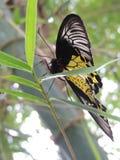 Бабочка на лист стоковое изображение rf