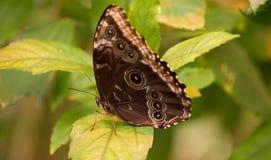Бабочка на лист Стоковые Фото
