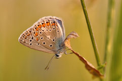 Бабочка на лист Стоковые Изображения RF
