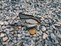 Бабочка на камне Стоковая Фотография