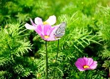 Бабочка на космосе Стоковое Изображение