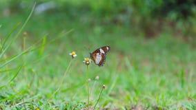 Бабочка на крошечном цветке Стоковое Изображение RF