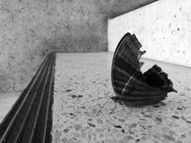 Бабочка на лестнице стоковая фотография rf