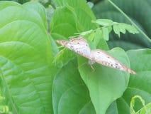 Бабочка на листьях Стоковые Изображения