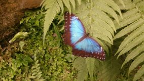 Бабочка на лист в ботаническом саде стоковые изображения