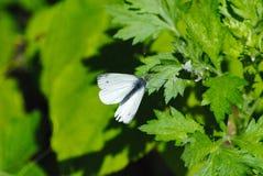 Бабочка на лист дерева весной стоковые фото