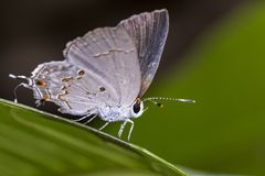 Бабочка на лист крайности конца фото макроса вверх - бабочки на лист Стоковое Изображение RF