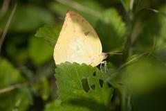 Бабочка на лист стоковая фотография rf