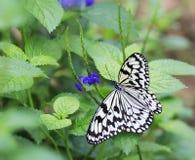 Бабочка на макросе цветка Стоковое Изображение